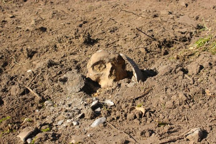 ROMU-arkæologer udforsker skeletfund på sommerhusgrund
